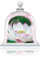 midnight-lotus-fragrance