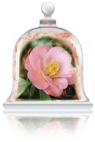 sensual-camellia-fragrance