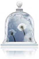 white-dandelion-fragrance